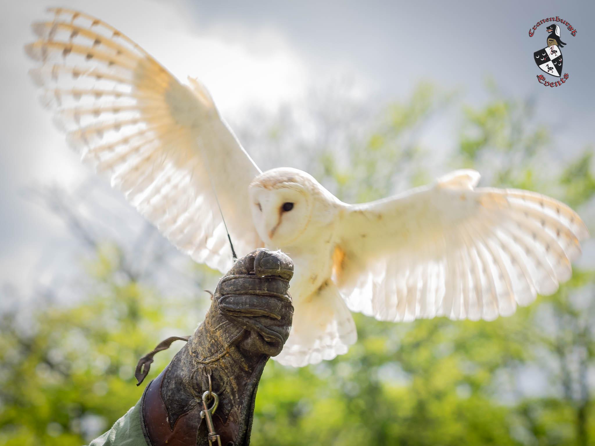Middeleeuws-Festijn-Cannenburgh-2019-Ellen-la-Faille-21